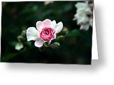 Pink And White Flower Greeting Card