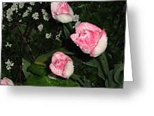 Pink And White Tulips In The Rain Greeting Card