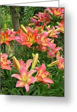 Pink And Yellow Daylilies Greeting Card