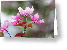Pink Apple Blossom 2 Greeting Card