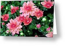 Pink Autumn Mums Greeting Card