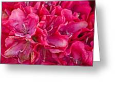 Pink Azalea Greeting Card