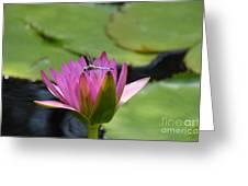 Pink Beaded Wings Greeting Card