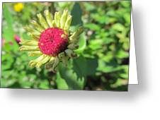 Pink Bud Greeting Card