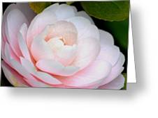 Pink Camellia Flower Greeting Card