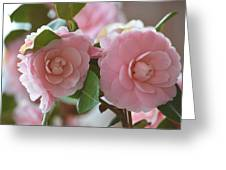 Pink Camellia Flowers Greeting Card