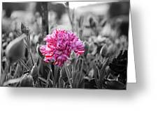 Pink Carnation Greeting Card by Sumit Mehndiratta