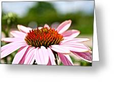 Pink Cone Flower Greeting Card