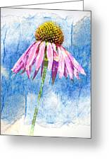 Pink Coneflower On Blue Greeting Card