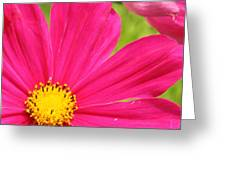 Pink Cosmo Greeting Card
