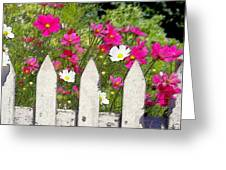 Pink Cosmos Flowers And White Picket Fence Greeting Card
