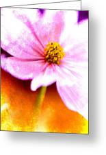 Pink Cosmos On Orange Greeting Card