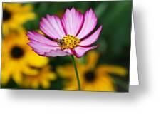 Pink Cosmos Picotee And Bee Greeting Card