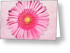 Pink Delight Greeting Card by Tamyra Ayles