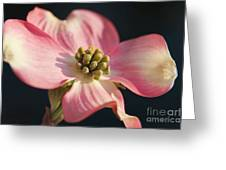 Pink Dogwood Greeting Card