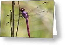 Pink Dragonfly With Sparkly Wings Greeting Card