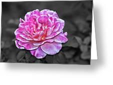 Pink Flame Greeting Card