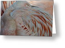 Pink Flamingo 7 Greeting Card