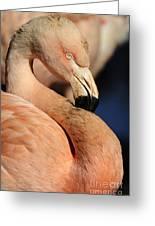 Pink Flamingo 8 Greeting Card