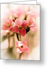 Pink Floral 1 Greeting Card