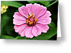 Pink Flower 4 Greeting Card