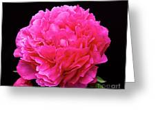 Pink Flower After Rain Greeting Card