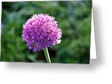Pink Flower Ball Greeting Card