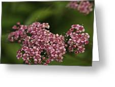 Pink Flower Cluster Greeting Card