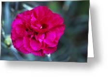 Pink Flower (dianthus 'carlotta') Greeting Card