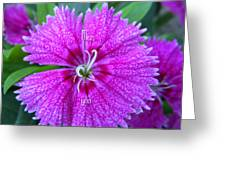 Pink Flower Miss You Greeting Card