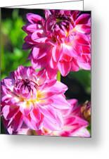 Pink Flower Pair Greeting Card