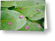 Pink Flower Petals Resting On Dew Greeting Card