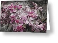 Pink Flowering Crabapple And Grunge Greeting Card