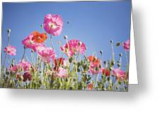 Pink Flowers Against Blue Sky Greeting Card
