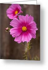 Pink Flowers And Wood  Greeting Card