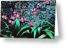 Pink Flowers Gray Wall Greeting Card