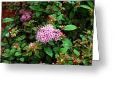 Pink Flowers Of Little Bavaria Greeting Card
