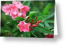 Coastal Flowers Greeting Card