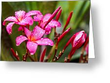 Pink Fluted Hibiscus In The Monsoons Greeting Card