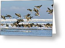 Pink-footed Geese On An Ice Floe Greeting Card
