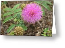 Pink Fuzzball Greeting Card