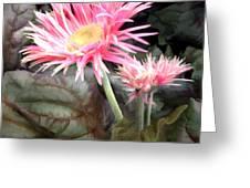 Pink Gerber Daisies Greeting Card