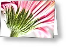 Pink Gerbera 9 Greeting Card
