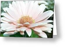 Pink Gerbera Flower Greeting Card