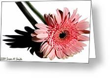 Pink Gerbera Greeting Card