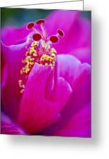 Pink Hibiscus 2 Greeting Card