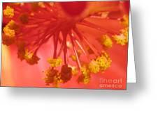 Pink Hibiscus Flower Greeting Card
