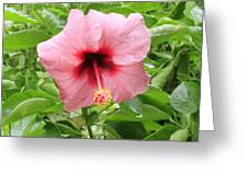 Pink Hibiscus V2 Greeting Card