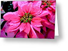Pink Holiday Poinsettias Greeting Card