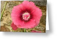 Pink Hollyhock 1 Greeting Card